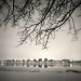windsor_trees_2008