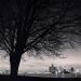 detroit_tree_1995